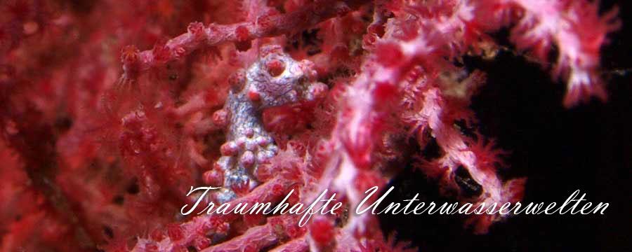 Traumhafte Unterwasserwelten